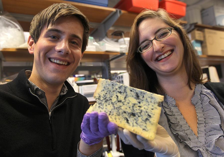 Microbiologists Benjamin Wolfe and Rachel Dutton at Dutton's Harvard lab with a wedge of Bayley Hazen Blue.